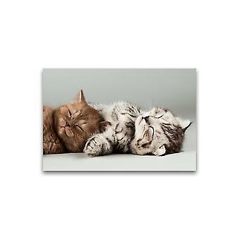 Tiny Kittens Sleeping Poster -Afbeelding door Shutterstock