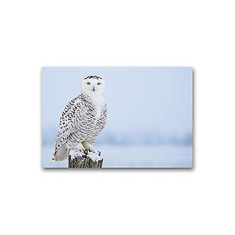 Søt Snowy Owl Poster -Bilde av Shutterstock