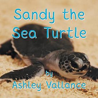 Sandy the Sea Turtle by Vallance & Ashley
