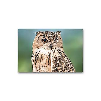 Owl Bird Portrait Plakat -Bilde av Shutterstock