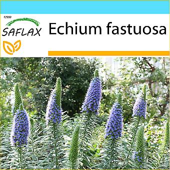 Saflax - Geschenk-Set - 100 Samen - stolz von Madeira - Vipérine de Madère - Orgoglio di Madeira - Tajinaste Azul - Blauer - Natternkopf