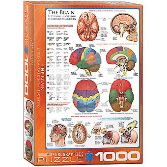 The Brain 1000 Piece Jigsaw Puzzle 680Mm X 490Mm