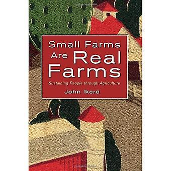 Piccole aziende agricole sono reali nella fattoria