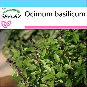 Saflax - Geschenk-Set - 200 Samen - Thai-Basilikum - Kletterseils Thai - Basilico Tailandese - Albahaca - Thai - Basilikum