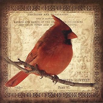 Male Cardinal Poster Print by John Jones (12 x 12)