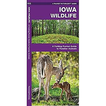 Iowa Wildlife: An Introduction to Familiar Species (Pocket Naturalist Guides)