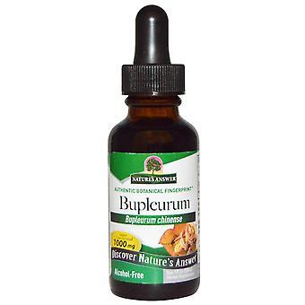 Nature's Answer, Bupleurum, sin alcohol, 1000 mg, 1 fl oz (30 ml)