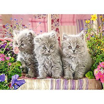 Castorland, Puzzle - Kittens - 300 Pieces