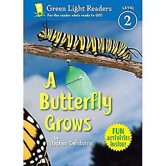 Motyl rośnie (zielone światło czytnika - poziom 2)