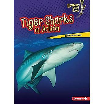 Tiger hajar i aktion (Lightning Bolt böcker Shark World)