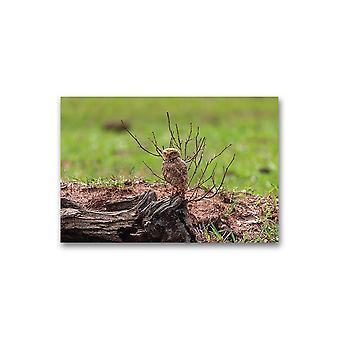 Den burrowing ugle plakat -bilde av Shutterstock