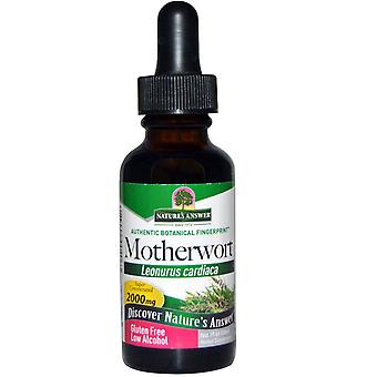 Nature's Answer, Motherwort, Low Alcohol, 2000 mg, 1 fl oz (30 ml)
