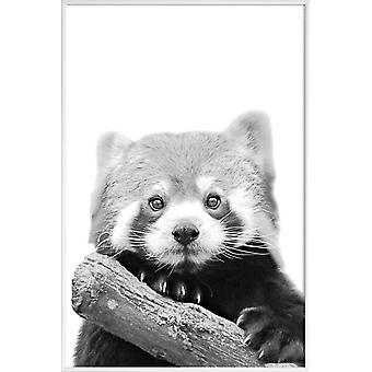 JUNIQE Print -  Red Panda - Wildtiere Poster in Schwarz & Weiß