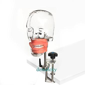 Dental Simulator Nissin Manikin Phantom Head, Dental Phantom Head Model Cu