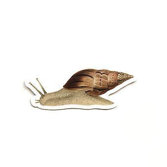 Vintage Snail Vinyl Sticker
