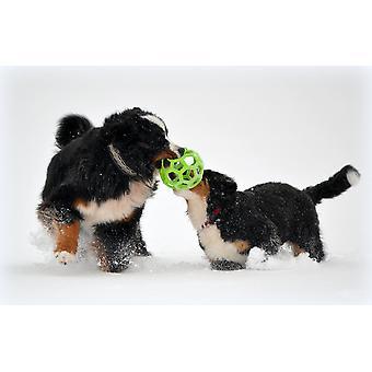 JW Pet Hol-ee rouleau caoutchouc jouet pour chien, taille 8 pouces, grande taille
