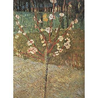Almond Tree in Blossom, Vincent Van Gogh, 48.5 x36cm