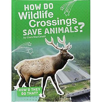 How Do Wildlife Crossings Save Animals? (How'd They Do That?)