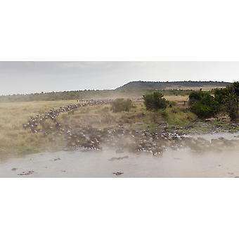 النو بوستيربرينت أفريقيا كينيا