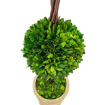 Modern Home Real Preserved Boxwood Double Ball Topiary