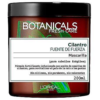 Kasvitieteet Cilantro Force Quellmaske 200 ml