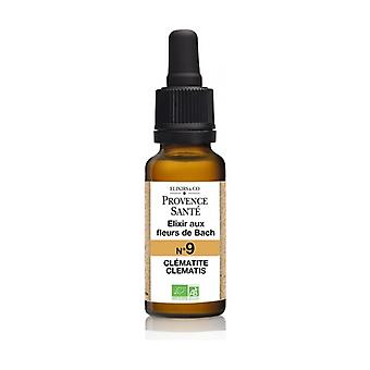 Organic Clematis 20 ml of floral elixir