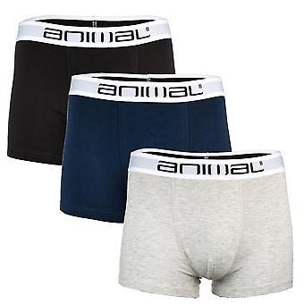 Animal Safe 3 Pack Underwear in Assorted