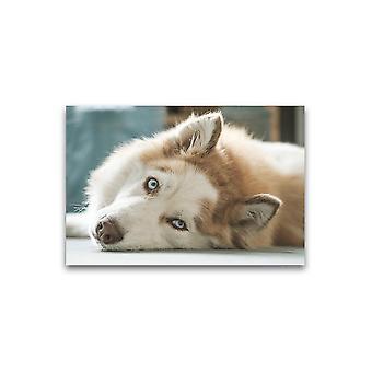 رائع سيبيريا هوسكي الكذب ملصق -صورة من قبل Shutterstock