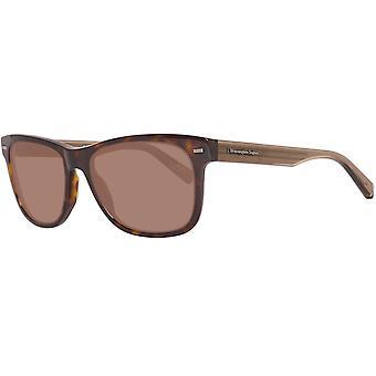 Brown Men Sunglasses