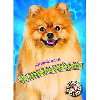 Pomeranians (geweldige honden)