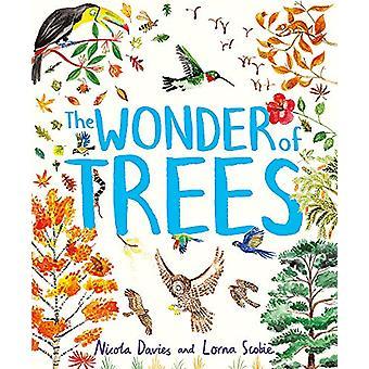 The Wonder of Trees by Nicola Davies - 9781444938197 Book