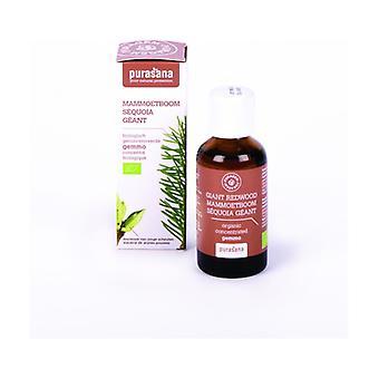 Sequoia 50 ml