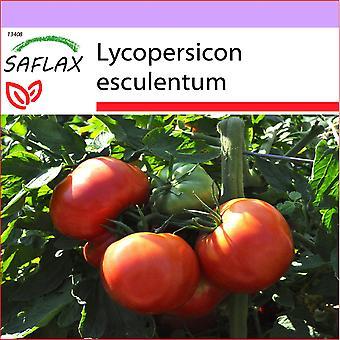 ספלקס-10 זרעים-עגבנייה-רוז דה ברן-Tomate רוז דה ברן-פומדורו רוזה די Berna-מטואט-רוזה דה ברן-טואט-רוז דה ברן