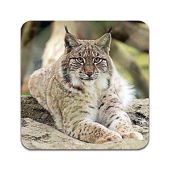 2 ST Lynx Coasters