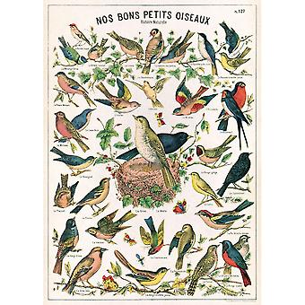 Cavallini Bird Chart Wrapping Paper / Poster - Scrapbooking