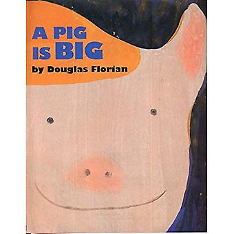 Een varken is Big