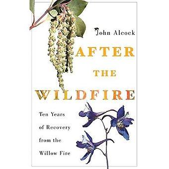 Na de wildvuur: tien jaar van herstel van het vuur van de wilg