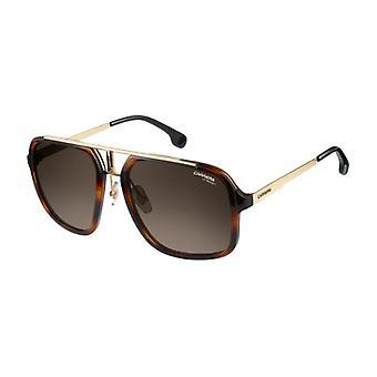Carrera 1004/S 2IK/HA Havana-Gold/Brown Gradient Sunglasses