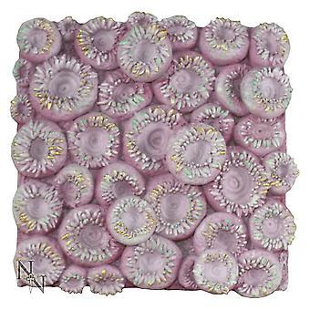 Nemesis Now Pink Sun Coral 21.5cm