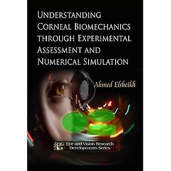 Understanding Corneal Biomechanics Through Experimental Assessment and Numerical Simulation