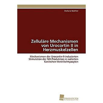 Zellulre Mechanismen von Urocortin II in Herzmuskelzellen by Walther Stefanie