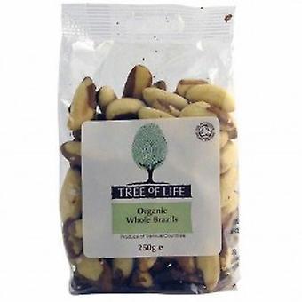 Tree Of Life - Organic Brazil Nuts - Whole 250g X 6