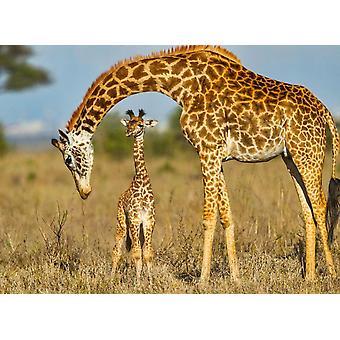 Sfondo Mural Masai Giraffa Proteggere Bambino