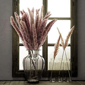 Herbe de pampa séchée naturelle définie pour le décor de la maison 30pcs (brun)