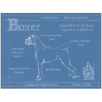 Blueprint Boxer Poster Print by Ethan Harper (16 x 12)