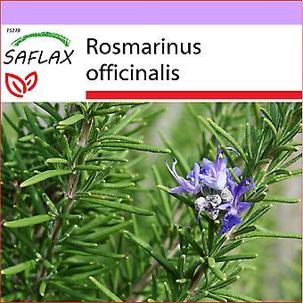 Saflax - 100 Samen - Rosmarin - Romarin - Rosmarino - Romero - Echter Rosmarin