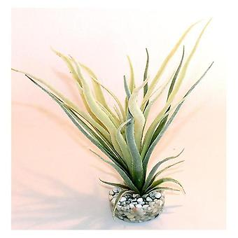 Sydeco Tillandsia Fan (fisk, dekoration, Artificitial planter)