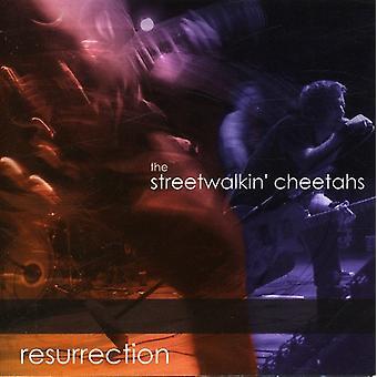 Streetwalkin' チーター - 復活 [CD] USA 輸入