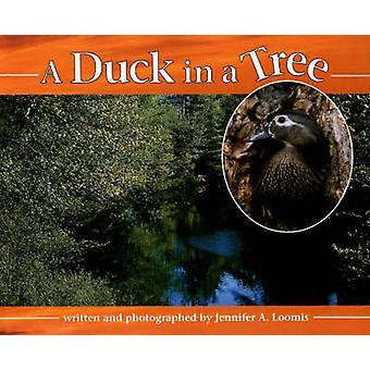 A Duck in a Tree by Jennifer A. Loomis - 9780880451369 Book