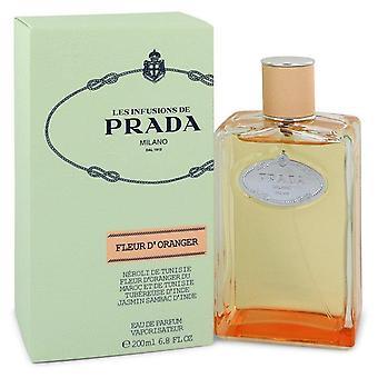 Prada infuusio De Fleur D & oranger Eau De Parfum Spray By Prada 6.8 oz Eau De Parfum Spray